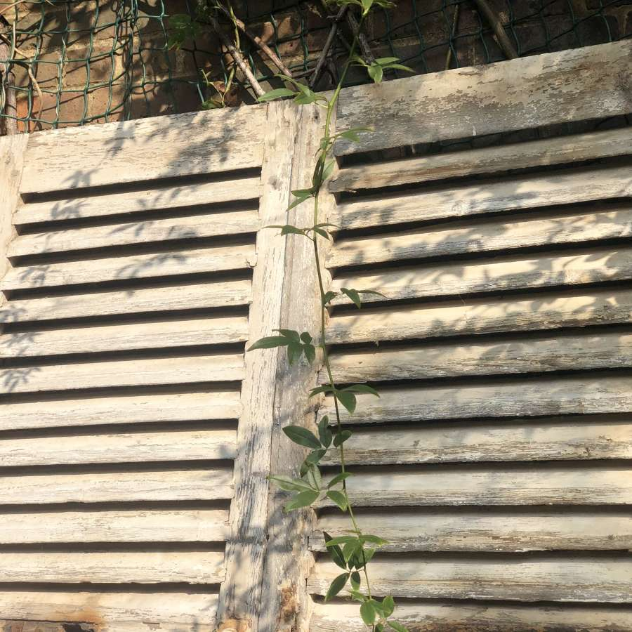 Large antique French oak shutters